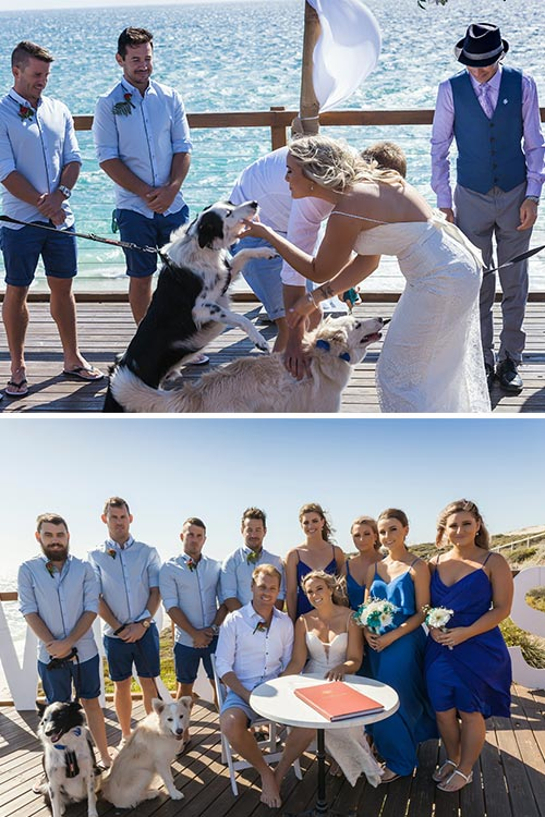At Amanda & Gaz's beach wedding their two dogs were part of the bridal party!